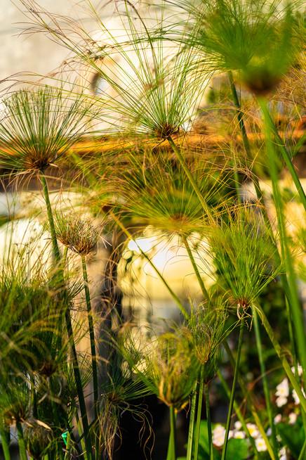 sicily-nature-plants-4.jpg