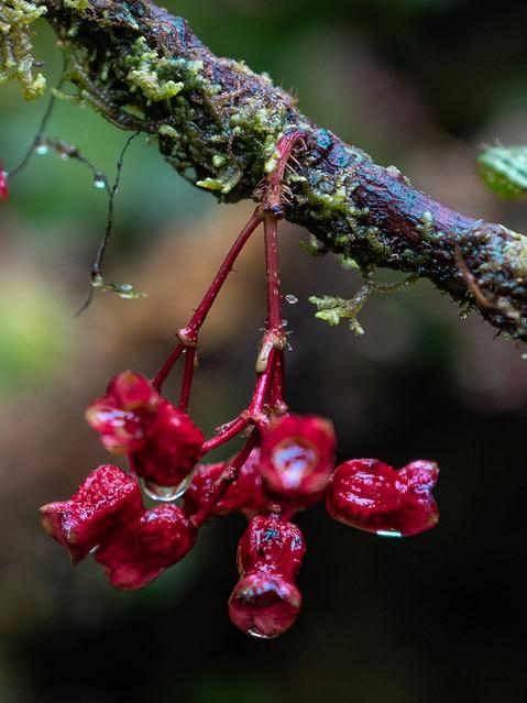 rainforest-nature-plants-flowers-4.jpg