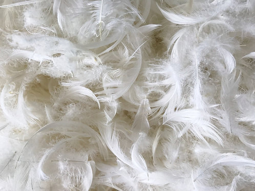 Cushion Inserts - 100% feather