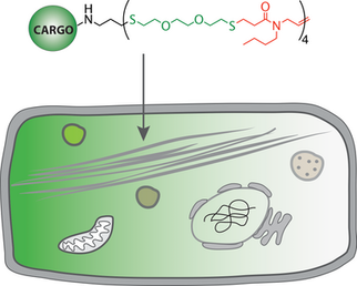 Intracellular Delivery via Noncharged Sequence-Defined Cell-Penetrating Oligomers