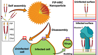 Inhibition of Measles Viral Fusion Is Enhanced by Targeting Multiple Domains of the Fusion Protein