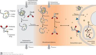 Predictive Platforms of Bond Cleavage and Drug Release Kinetics for Macromolecule–Drug Conjugates