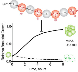 Effect of Composition on Antibacterial Activity of Sequence-Defined Cationic Oligothioetheramides