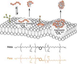 Antibacterial isoamphipathic oligomers highlight the importance of multimeric lipid aggregation for