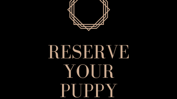 Reserve Your Puppy