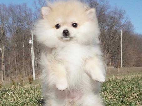 A Primer for Newbie Puppy Parents
