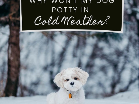 Puppy Potty Training Tips For Cold Weather