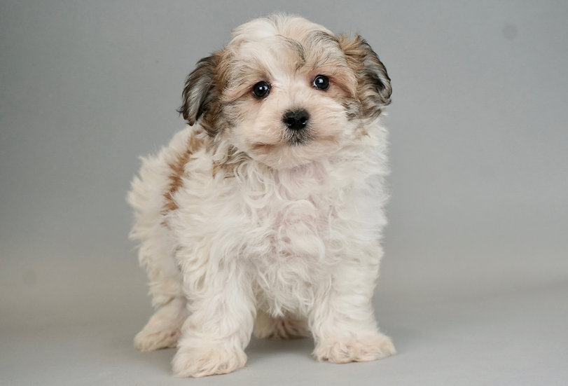 Sawyer - Shichon - Boy