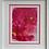 Thumbnail: Fuchsia