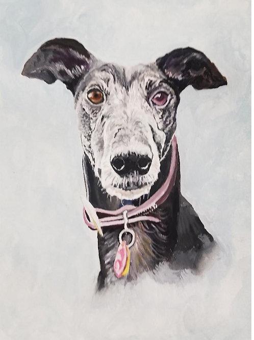 Sample Greyhound pet portrait