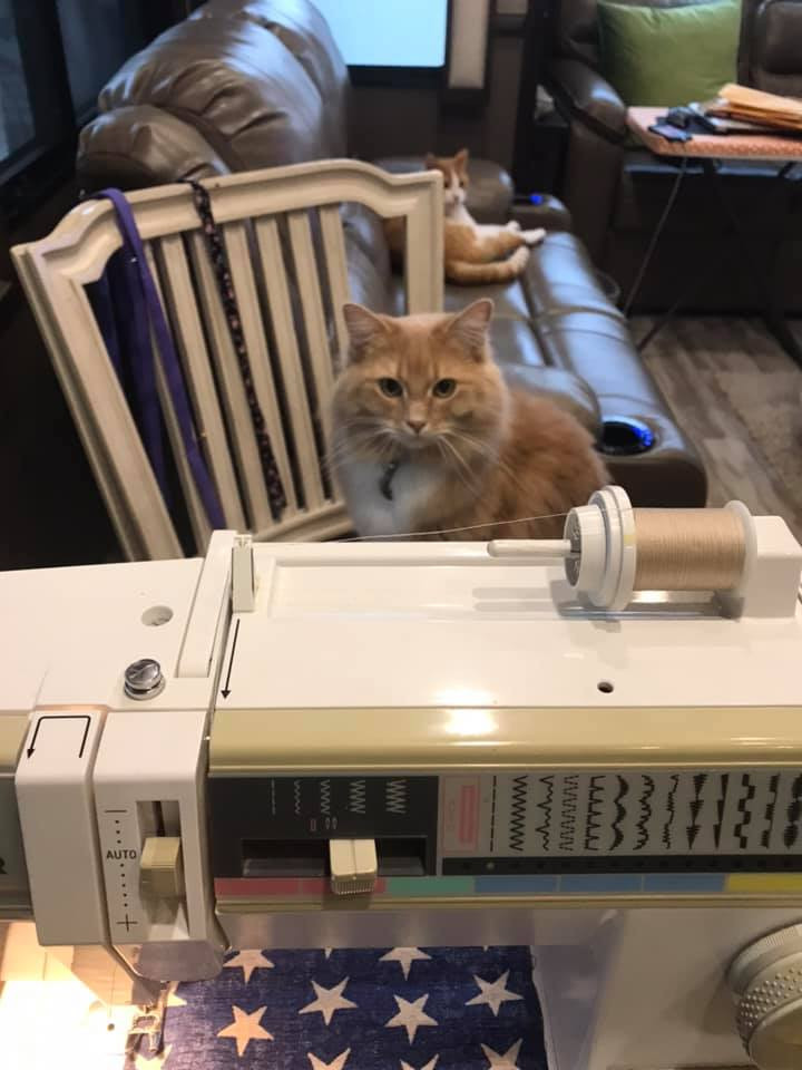 sewing machine with a cat looking on
