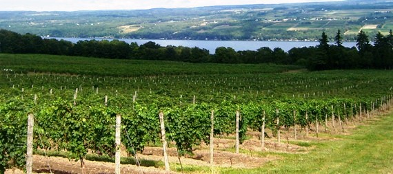 guided wine tour on Seneca Lake