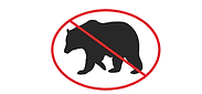 no bear.png