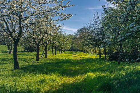 spring-4158957_1920.jpg