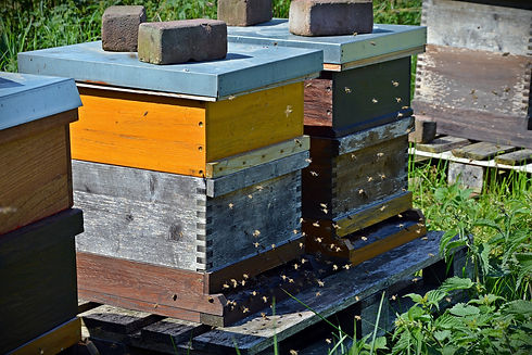 Image of beehives equipped with sensor technology to monitor colony conditions and honey production.
