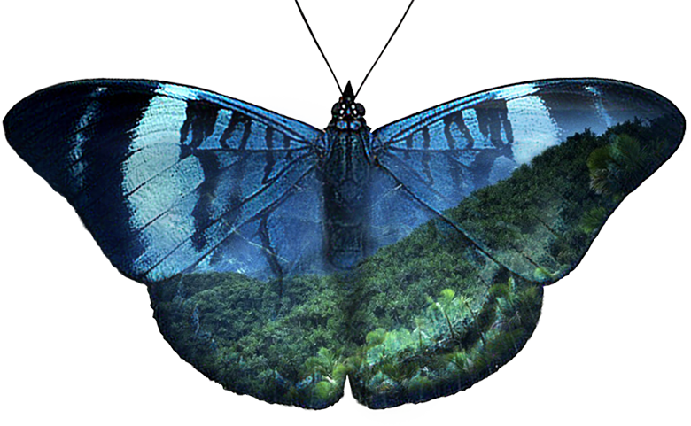 a rainforest of Costa Rica seen through the wings of a Panasea butterfly