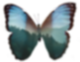 a rainforest of Costa Rica seen through the wings of a morpho butterfly