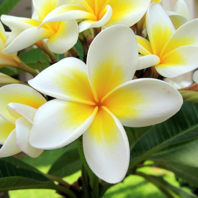 Taller de Danza Polinesia