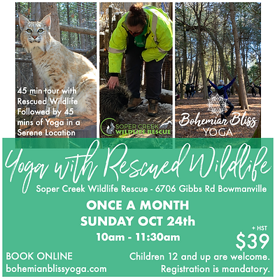 Yoga with Rescued Wildlife Ad 2021 3.png