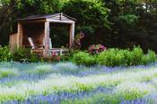 LavenderBlue_Scenery(7).jpg