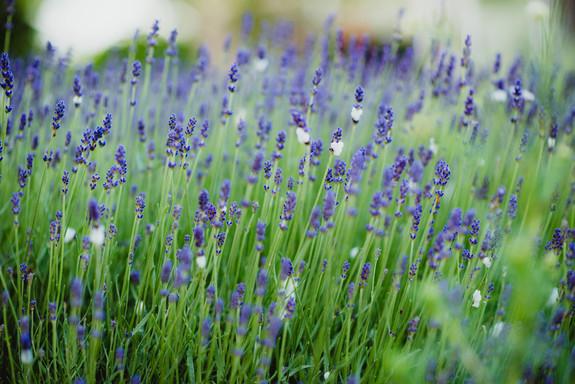 LavenderBlue_Scenery(6).jpg