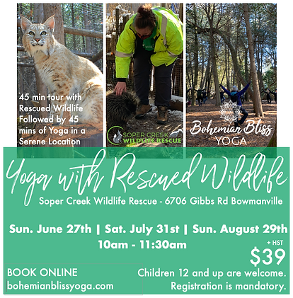 Yoga with Rescued Wildlife Ad 2021 2.png