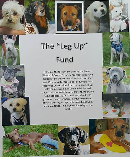 Dogs & cats helped by the Leg Up Fund
