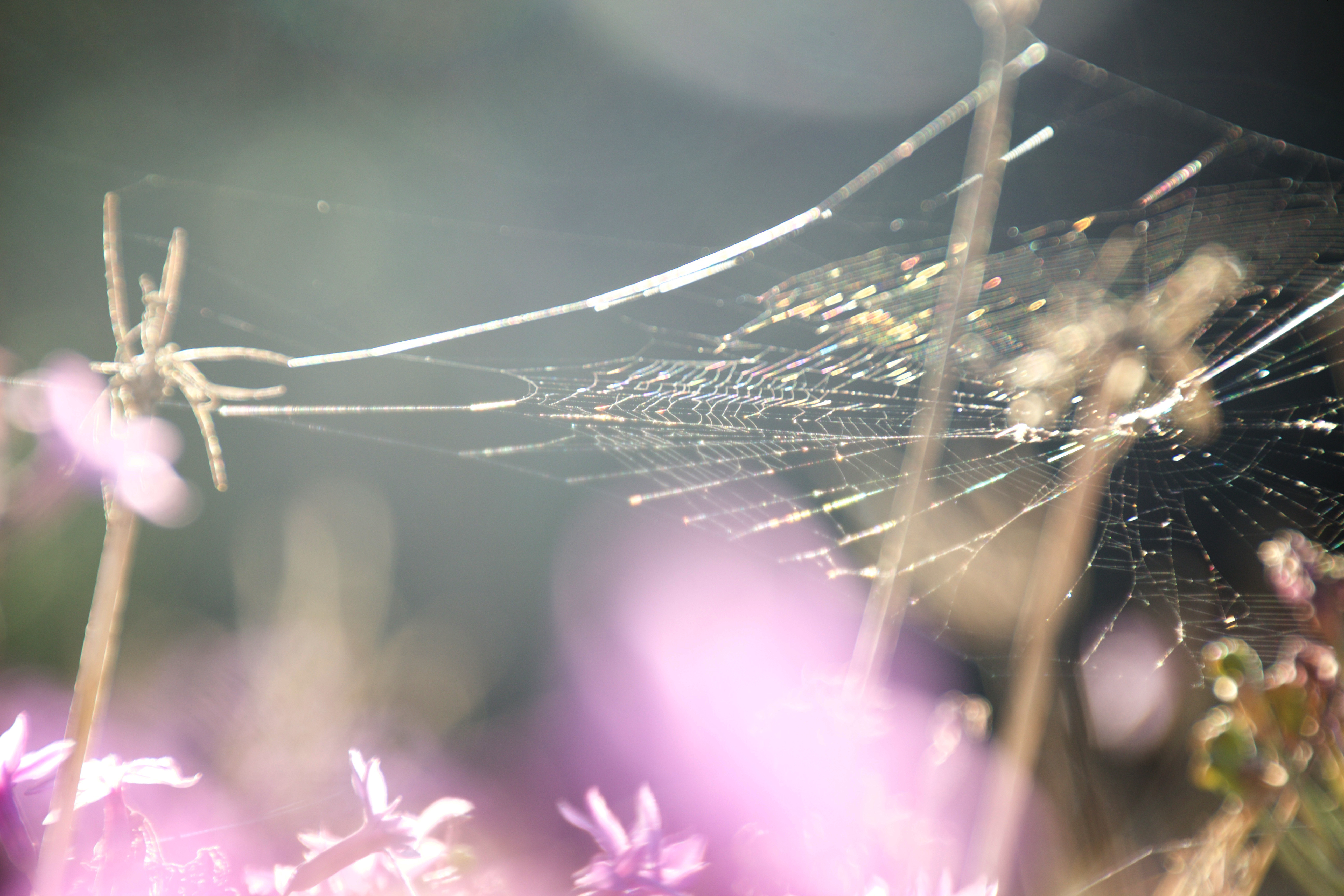 Rainbow spider web on lilac flowers