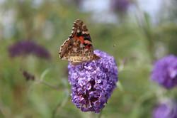 orange butterfly on organic flower