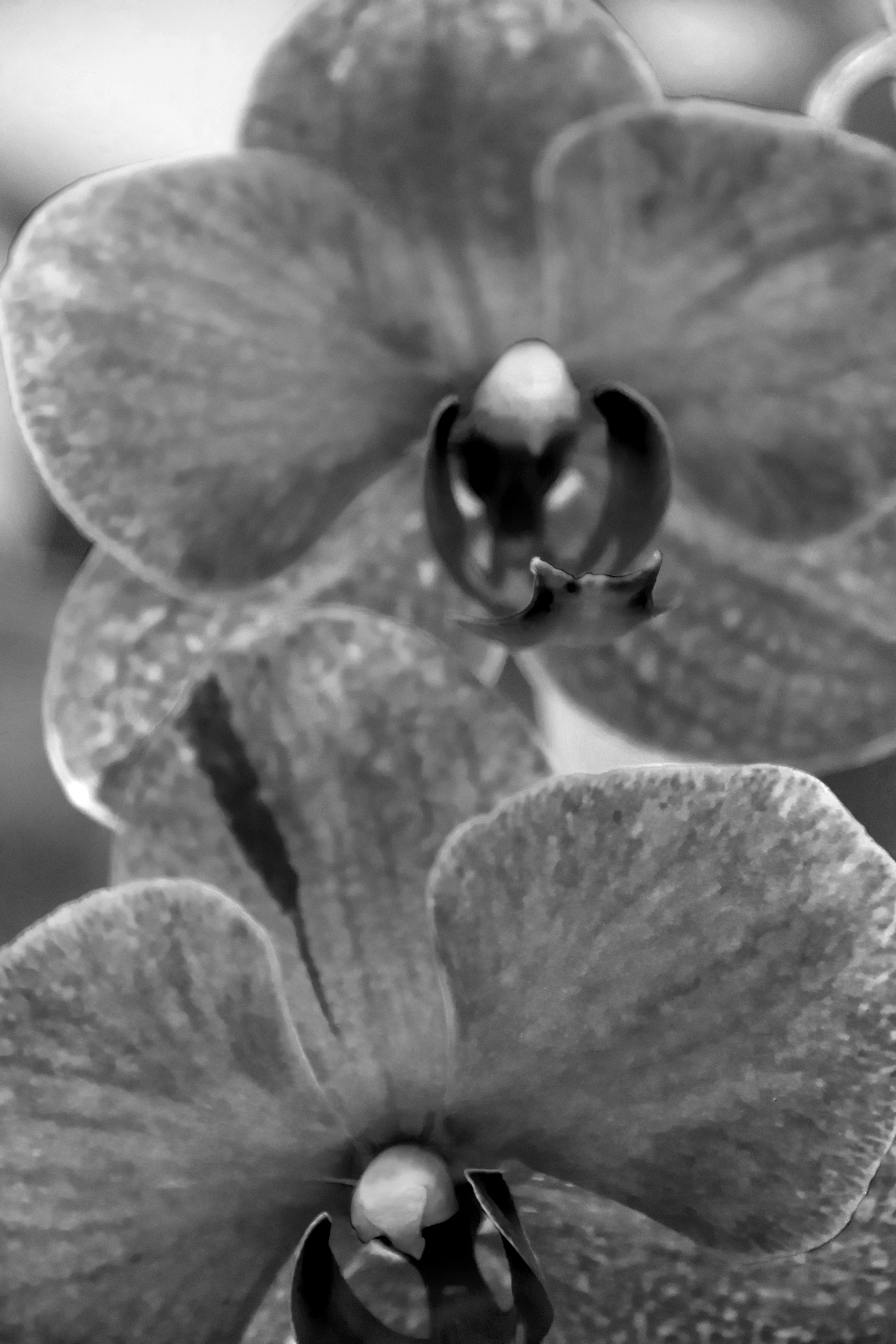two orchids in black and white