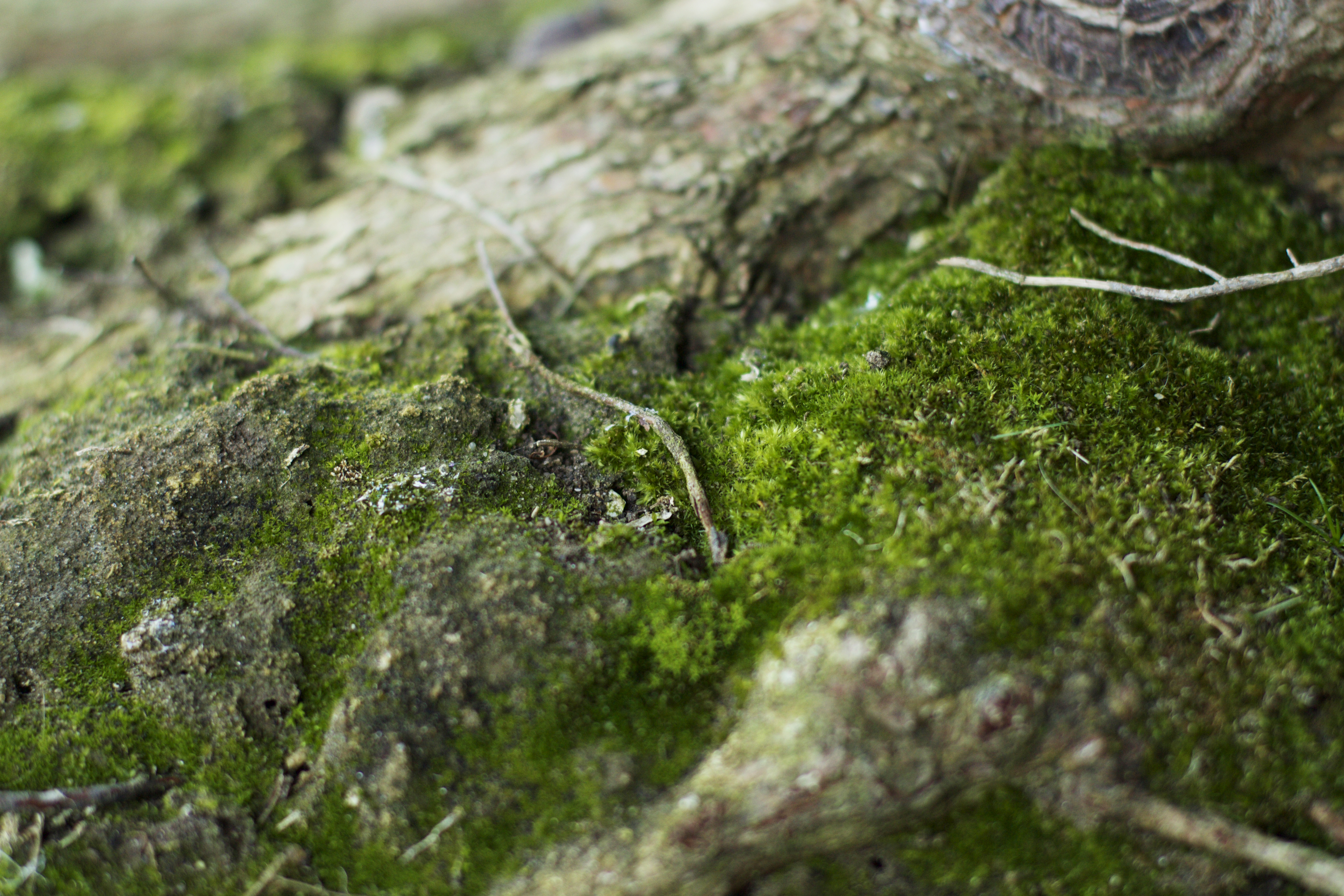 close up of moss on tree roots