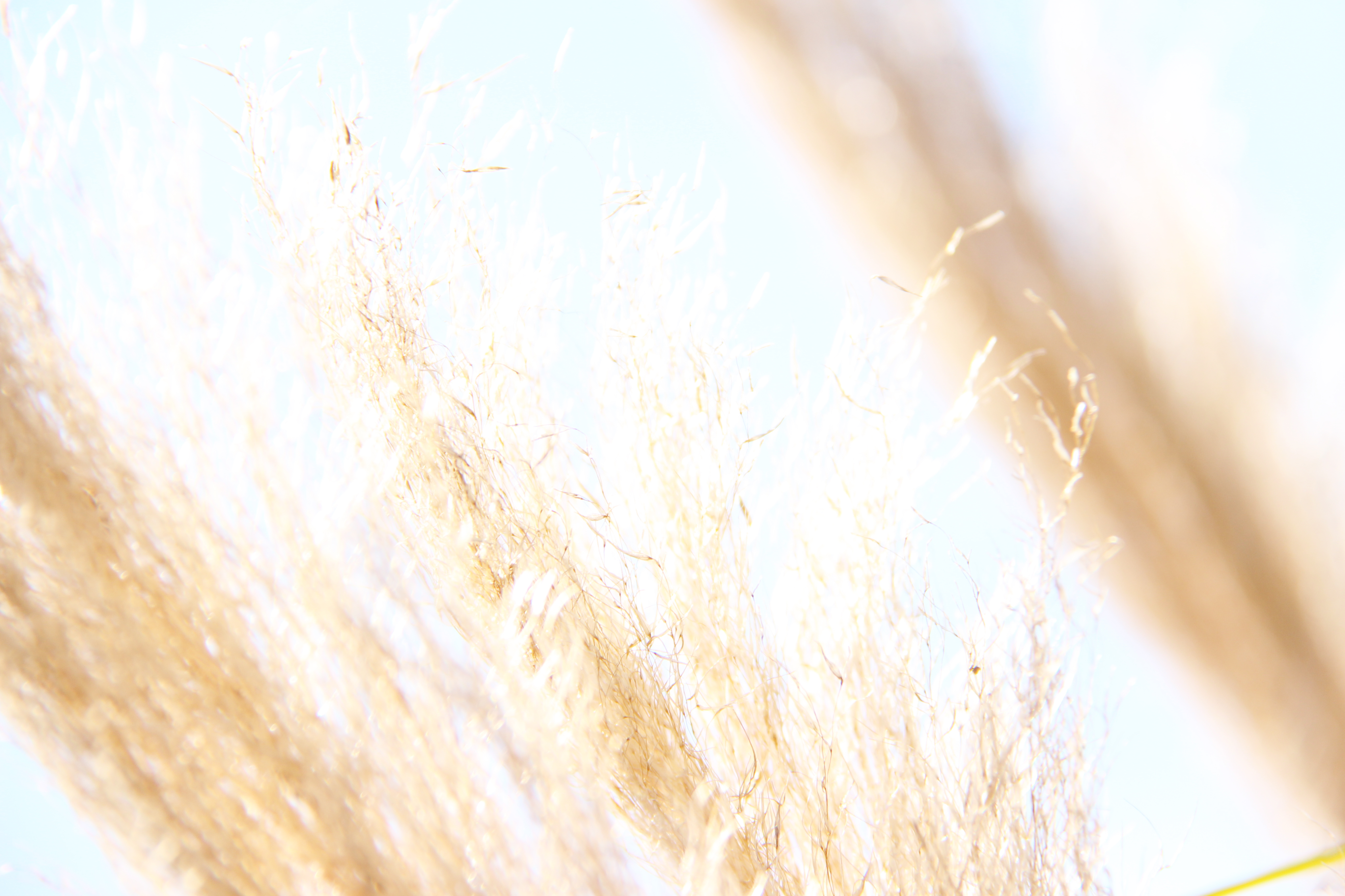 abstract beach grass with blue sky