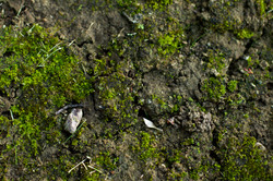close up of green moss on dirt