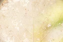 Close up of fall leaf