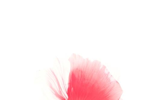 Red Poppy Naked