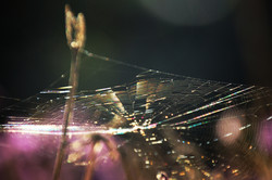 Rainbow spider web in sunlight
