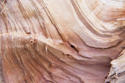 close up shot of woodgrain