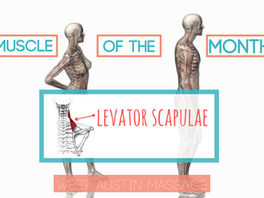 Muscle of the Month: Levator Scapulae