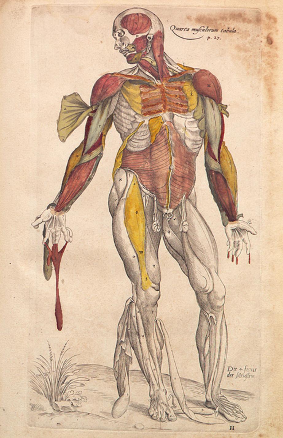 Vesalius illustration