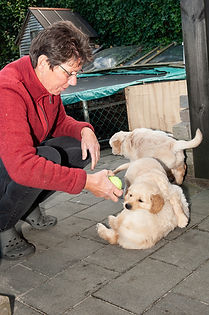 Pups fam Miedema 2018-045-e3foto.jpg