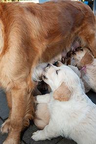 Pups fam Miedema 2018-079-e3foto.jpg
