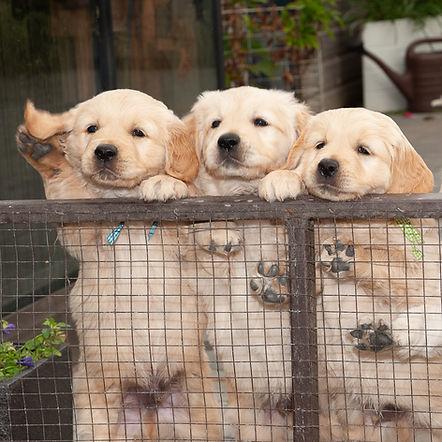 Pups fam Miedema 2018-003-e3foto.jpg