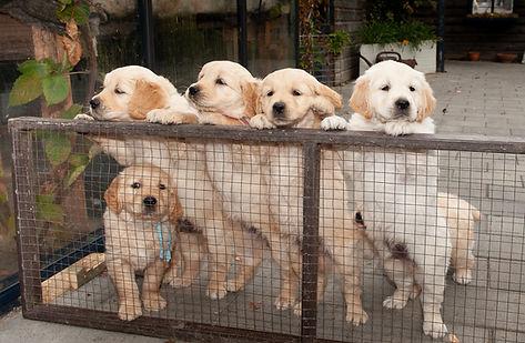 Pups fam Miedema 2018-014-e3foto.jpg