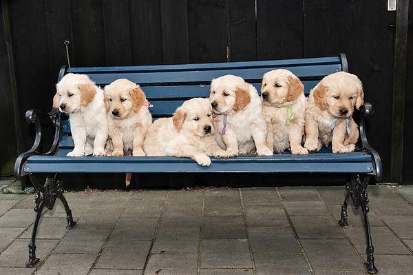Pups fam Miedema 2018-029-e3foto.jpg