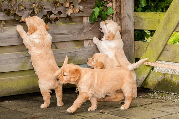 Pups van Kaja