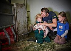 Ett griseliv
