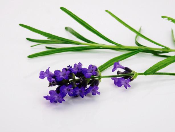 lavender-1573008_1280.jpg