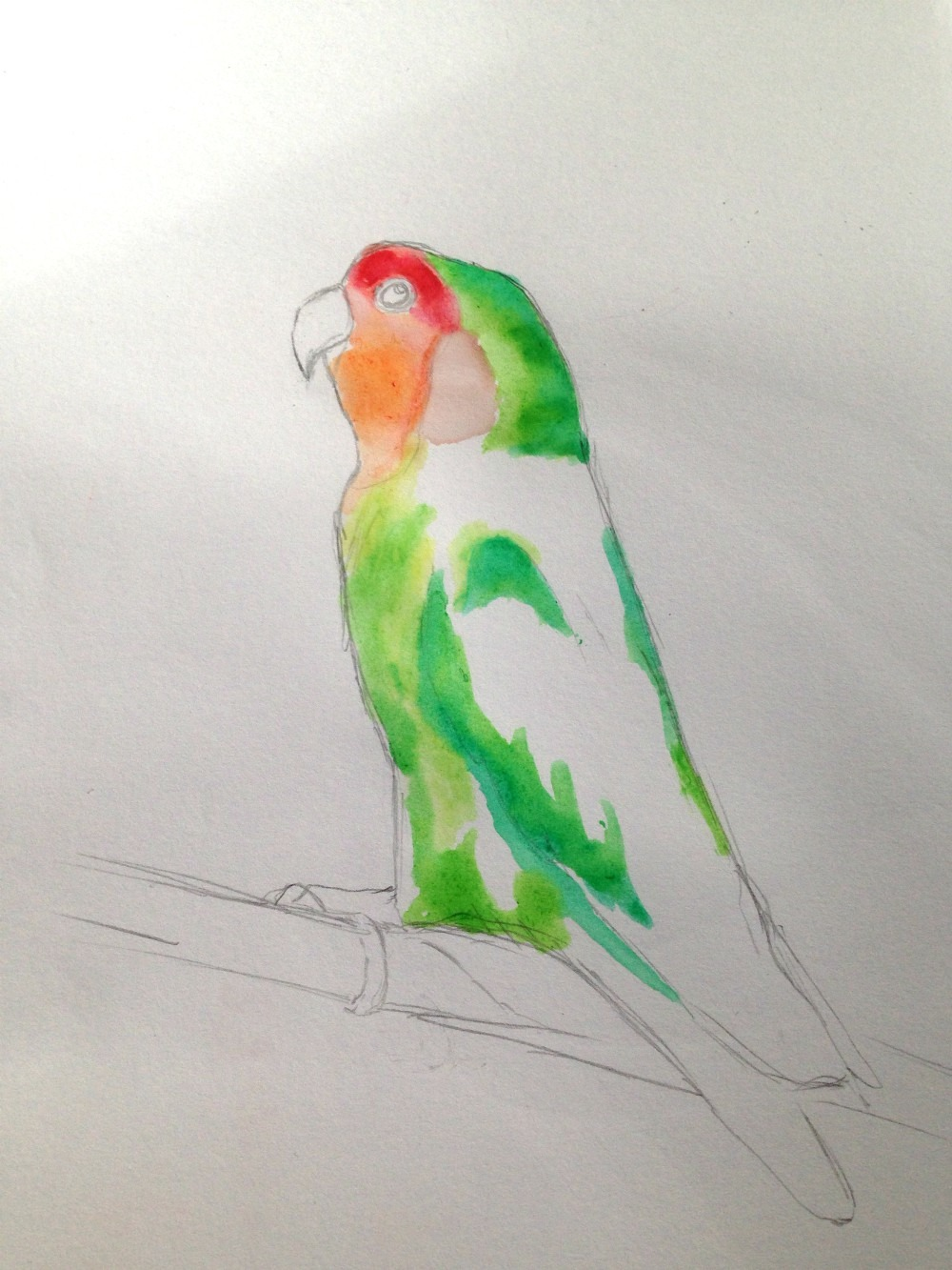 How To Draw A Love Bird Kalbelaphard