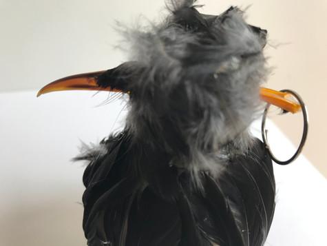 Bird bomb (2020)
