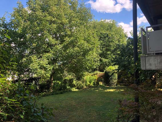 Blick in den gewachsenen Garten